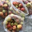 Яблочки на компот