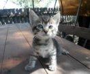 Котёнок мальчик бесплатно