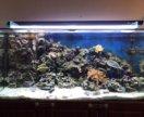 Морской аквариум 550 литров с наполнением