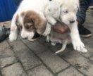 Щенки 🐶 собаки