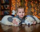 Новогодрий фотопроект с щенками.