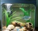 Срочно продам аквариум с рыбками.торг