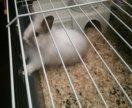 Кролик в мести с клеткой