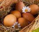 Свежее яйцо куриное