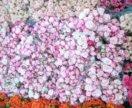 Розы кустовые в коробках круглых
