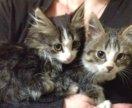 Шикарные котята-мышеловы