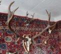 Рога животных на медальонах и изделия из рогов