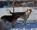 Собака пристраиваются вместе