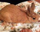 Кролик Сёма