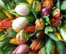 Тюльпаны к 8 марта Голландия