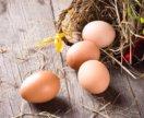 Столовое яйцо