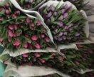 Тюльпаны розовые и фиолет