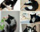 Возьму кота