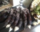 Хвосты меха чернобурки