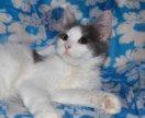 Котенок в добрые руки Груша, кошка в дар