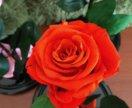 Роза в колбе стабилизированная роза вечная роза