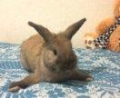 Кролик Растяпа