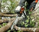 Профессиональное спиливание деревьев. Покос травы.