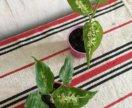 Горшечные растения в ассортименте