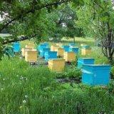 Мёд. Фото 1. Красноярск.