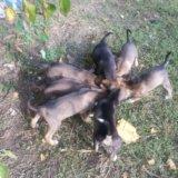 Красивые щенки!. Фото 3. Армавир.