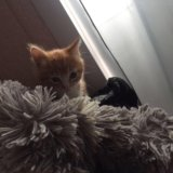 Котёнок. Фото 1. Хабаровск.