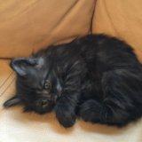 Котёнок привезём котенок. Фото 1.