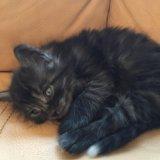 Котёнок привезём котенок. Фото 2.