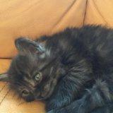 Котёнок привезём котенок. Фото 4.