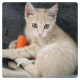Котёнок мишель. Фото 2.