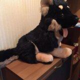 Мягкая игрушка - собака. Фото 2. Москва.