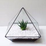 Флорариум пирамидка с хавортией. Фото 2. Санкт-Петербург.