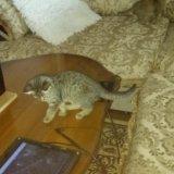 Котята. Фото 1. Буйнакск.