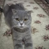 Котята. Фото 3. Буйнакск.
