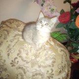 Котята. Фото 4. Буйнакск.