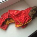 Одежда для собак. Фото 4.