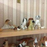 Коллекция фарфоровых собак. Фото 1. Тюмень.