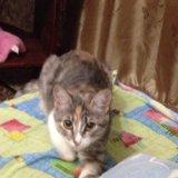 Кошка. Фото 1. Альметьевск.