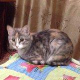 Кошка. Фото 2. Альметьевск.