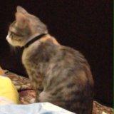 Кошка. Фото 3. Альметьевск.