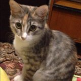 Кошка. Фото 4. Альметьевск.