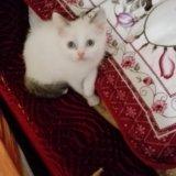 Сиамский котенок. Фото 3. Ногинск.