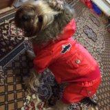 Комбенизон для собак, новый, причина продажи-мал. Фото 1.