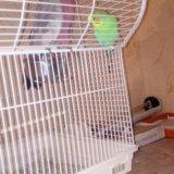 Попугай какаду с другом. Фото 3. Белгород.