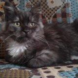 Кошка в добрые руки. Фото 1. Луховицы.
