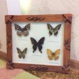 Бабочки картина. Фото 1.