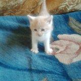Котенок. Фото 1. Смоленск.