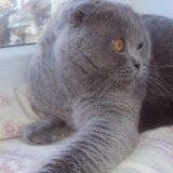 Вязка кота. Фото 2. Владимир.