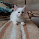 Котенок мальчик. Фото 1.