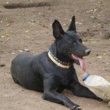 Собака. Фото 2. Люберцы.